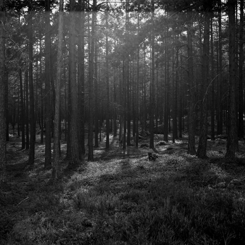 Astrid Kruse Jensen: 'The Forest', 2015